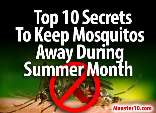 Top 10 Secrets To Keep Mosquitos Away During Summer Months!
